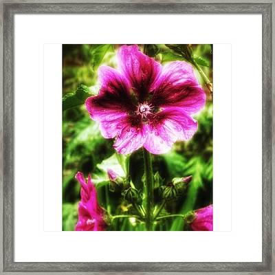 #flower #photos #photoofday Framed Print