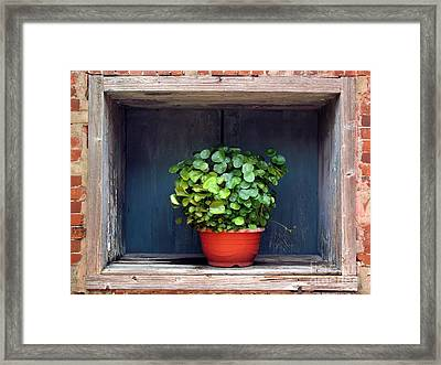 Flower Pot In A Window Framed Print by Yali Shi