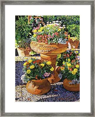 Flower Pots In Sunlight Framed Print by David Lloyd Glover