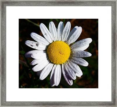 Flower Power Framed Print by Bill Cannon
