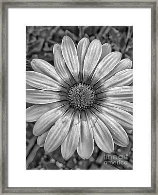 Flower Power - Bw Framed Print