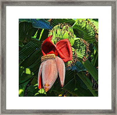 Flower Power Framed Print by HH Photography of Florida