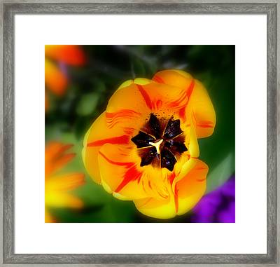 Flower Power Framed Print by Martina  Rathgens