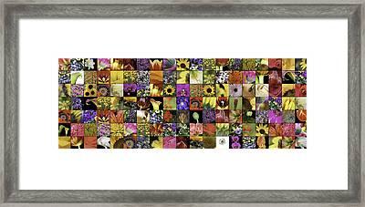 Flower Power Pano Framed Print by Janet Fikar