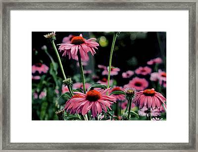 Flower Power Framed Print by Tom Prendergast