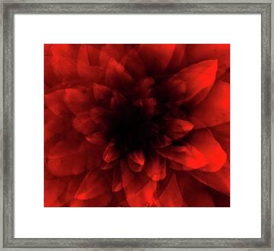 Flower  Red Shade Framed Print