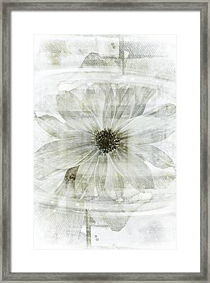 Flower Reflection Framed Print by Frank Tschakert
