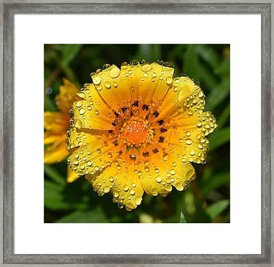 Flower Reflection In Water Drops Framed Print by Linda Brody