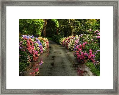 Flower Road Framed Print by Svetlana Sewell