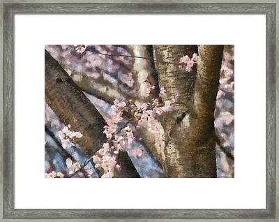 Flower - Sakura - Spring Blossom Framed Print by Mike Savad