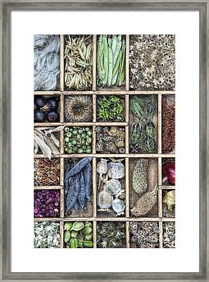 Flower Seeds Framed Print