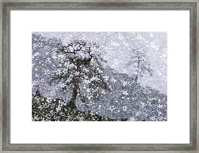 Flower Shower Framed Print