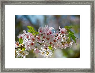 Flower Spray Framed Print
