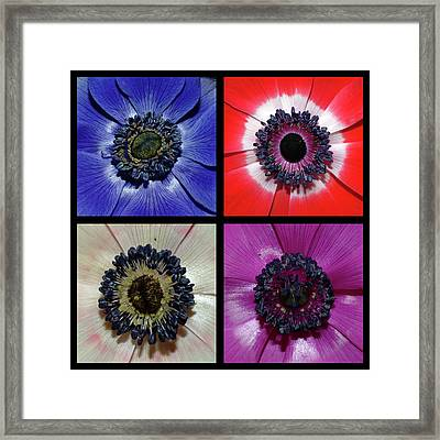 Flower Square Montage - Anemone Framed Print by Robert Shard