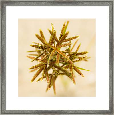 Flower Star Framed Print