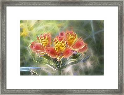 Flower Streaks Framed Print