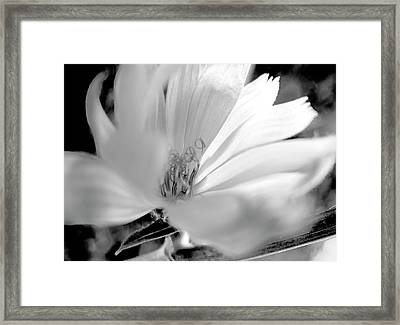 Flower Sun Light, Black And White,  Framed Print by Nat Air Craft