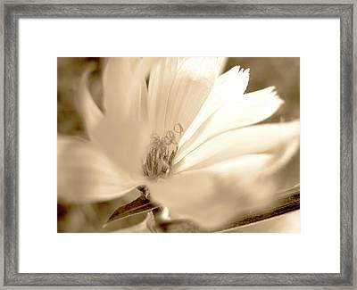 Flower Sun Light, Sepia Framed Print by Nat Air Craft