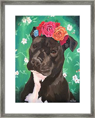 Flower The Pitbull Framed Print by Elisa Bolanos