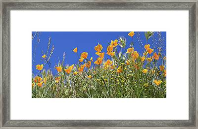 Framed Print featuring the photograph Flower Trail Diamond Valley Lake by Cliff Wassmann