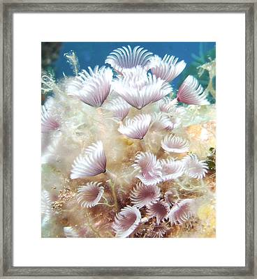Flower Tube Worms Framed Print by Cherry Woodbury