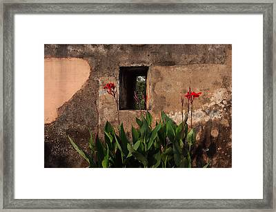 Flower Wall Framed Print