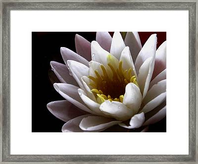 Framed Print featuring the photograph Flower Waterlily by Nancy Griswold