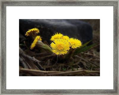 Flower Weed Framed Print by Svetlana Sewell
