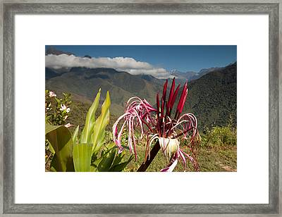 Flower With Cloudforest Framed Print