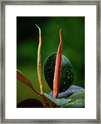 Flower_05 Framed Print