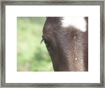 Framed Print featuring the photograph Flowerfly by Lynda Dawson-Youngclaus