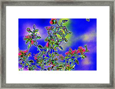 Flowering Brittle Bush In An Altered State Framed Print by Richard Henne