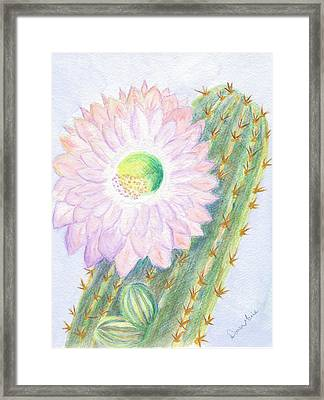 Flowering Cactus Framed Print by Dawn Marie Black