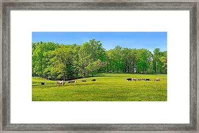 Flowering Cow Pasture Framed Print