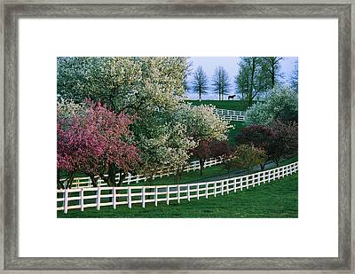 Flowering Crab Apple Trees Bloom Framed Print