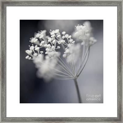 Flowering Dill Cluster Framed Print