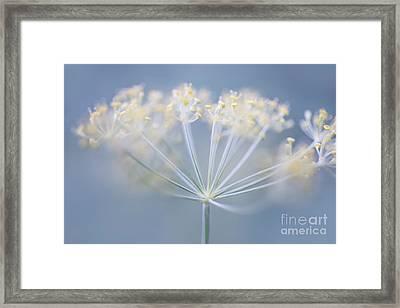 Flowering Dill Framed Print