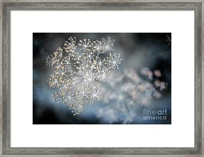Flowering Dill Macro Framed Print