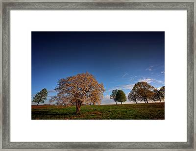Flowering Dogwood At Valley Forge Framed Print by Rick Berk