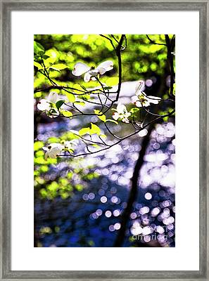 Flowering Dogwood Tree Along A River Framed Print by George Oze