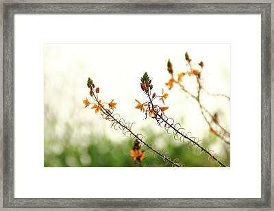 Framed Print featuring the photograph Flowering In Israel At The Sunset by Yoel Koskas