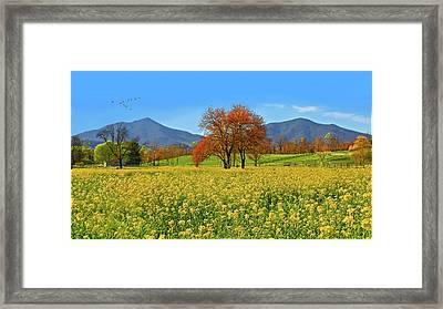 Flowering Meadow, Peaks Of Otter,  Virginia. Framed Print