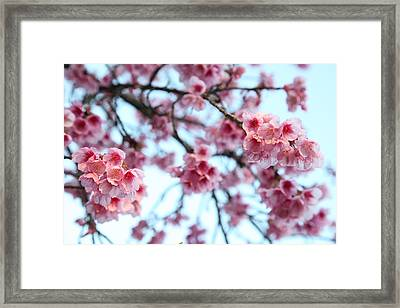 Framed Print featuring the photograph flowering of the almond tree, Jerusalem by Yoel Koskas