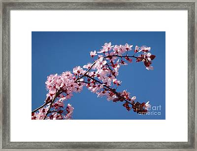 Flowering Of The Plum Tree 4 Framed Print by Jean Bernard Roussilhe