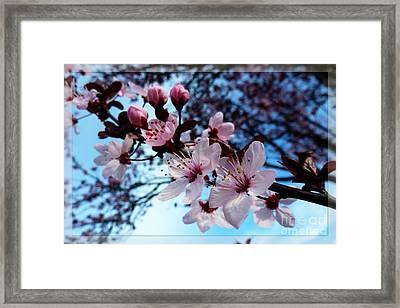Flowering Of The Plum Tree 6 Framed Print by Jean Bernard Roussilhe