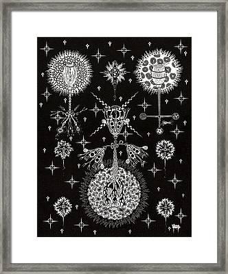 Flowering Optimism Framed Print by Ron Jones