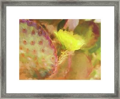 Flowering Pear Framed Print