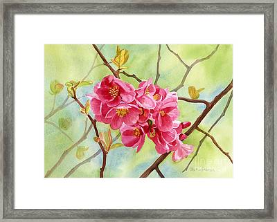 Flowering Quince With Background Framed Print by Sharon Freeman