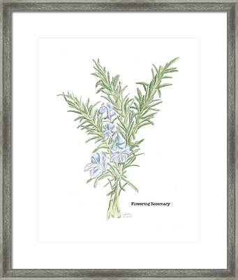 Flowering Rosemary Framed Print