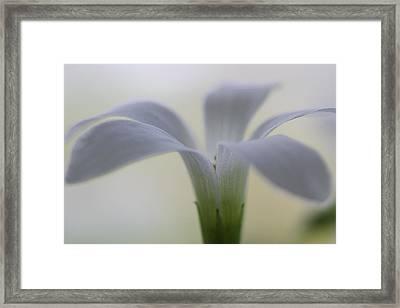 Flowering Shamrock Framed Print